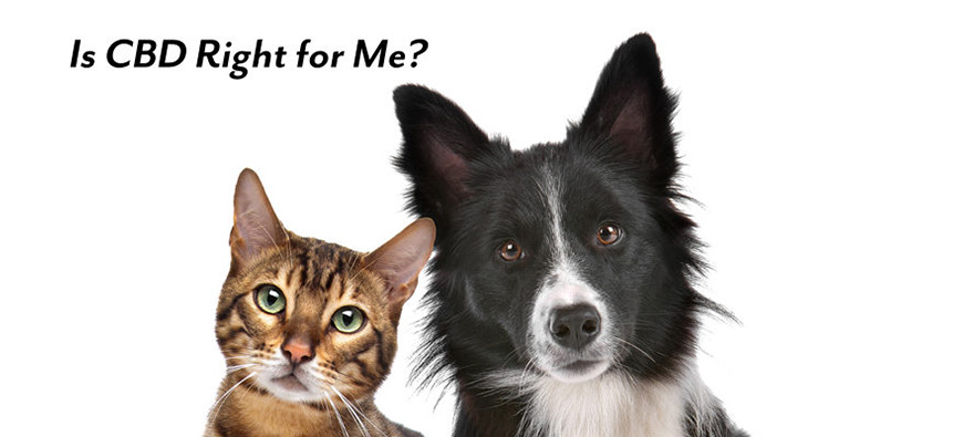 benefits of cbd for pets
