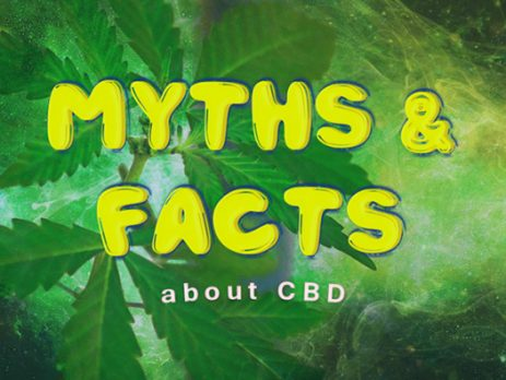myths and facts about cbd