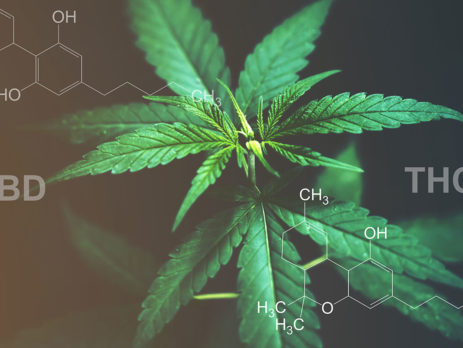differences between CBD and THC?